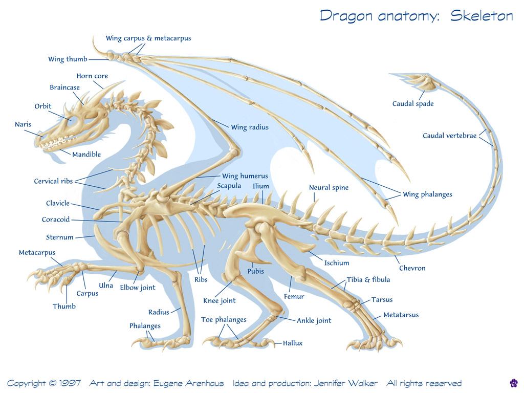 Bearded Dragon Body Parts Diagram - Data SET •