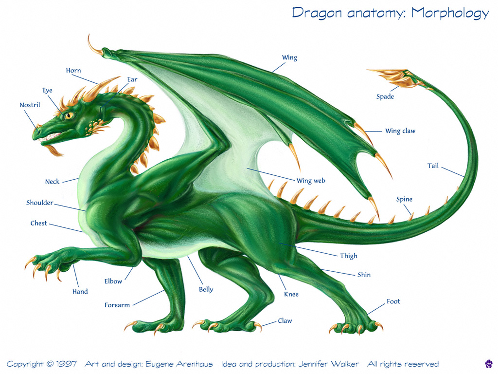 Dragon Physiology - Here Be Dragons! Draconian.com